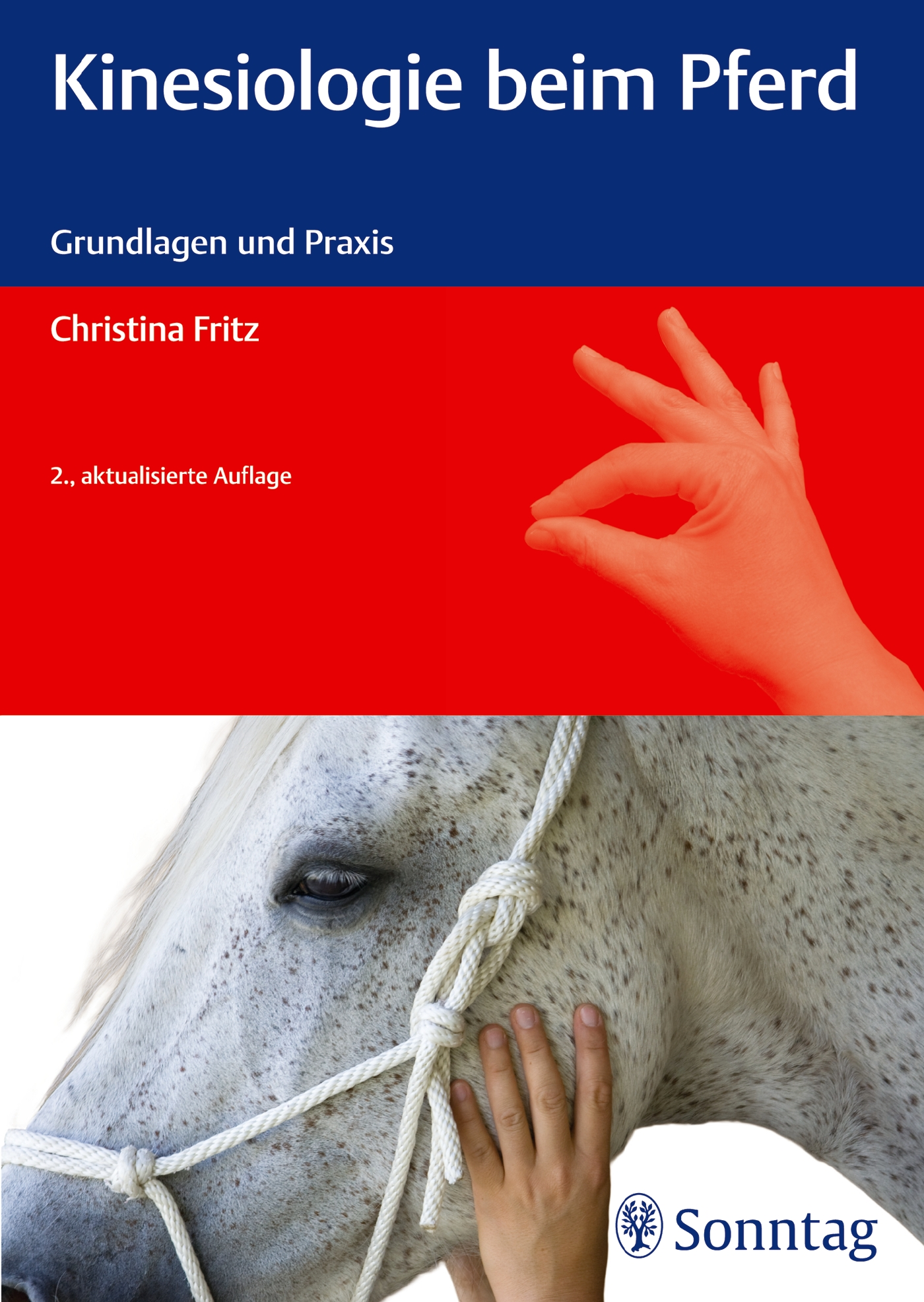 Kinesiologie beim Pferd
