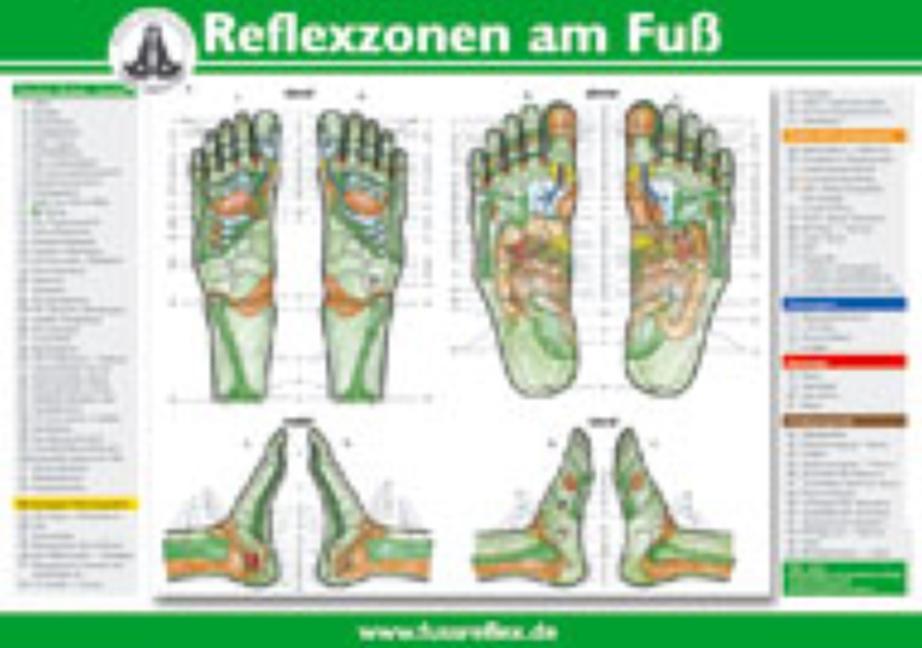 Die Reflexzonen der Füße