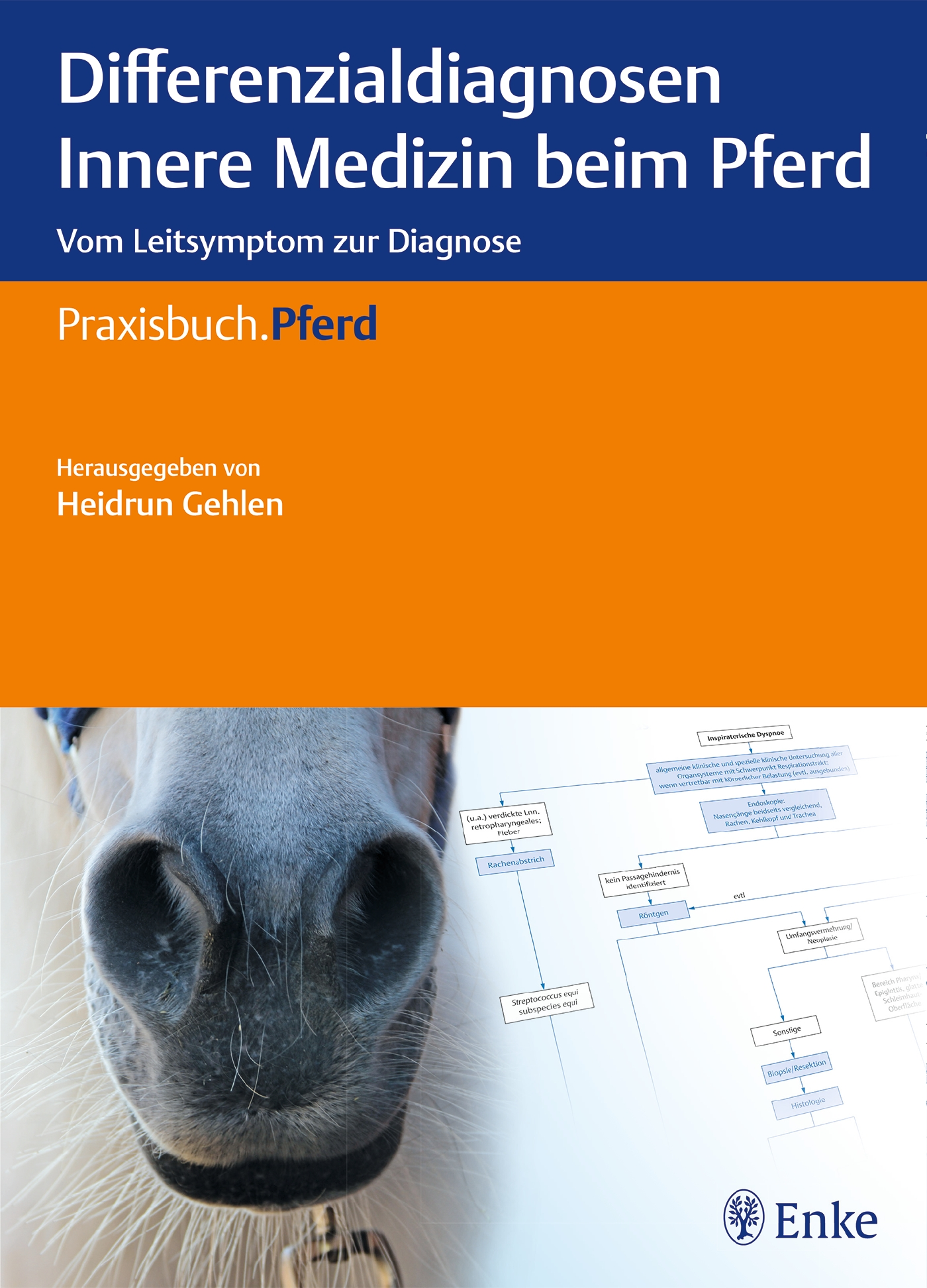 Differenzialdiagnosen Innere Medizin beim Pferd